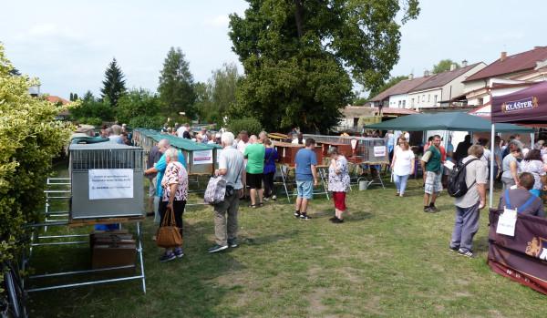 Nové Boleslavsko pro volný čas: Místní výstava králíků, holubů a drůbeže