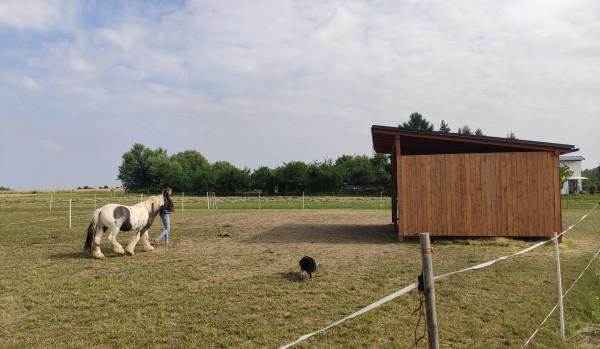 Hipoterapeuteční koně mají nový přístřešek